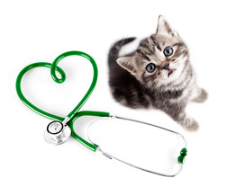 medical-attention-cats-veterinarian- chats-chiens-visits a domicile-cat-sitting-pet-sitting